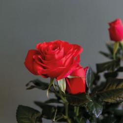Livraison de bouquets de fleurs en France, en 4 heures